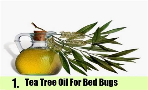 tea tree oil for bed bugs 9 home remedies to kill bed bugs natural treatments