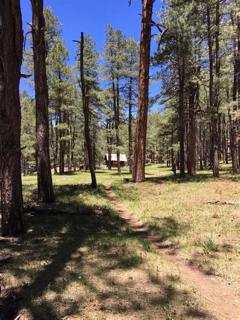 Cabin Loop Trail Az by Woods Lake Recreation Area Az Trover