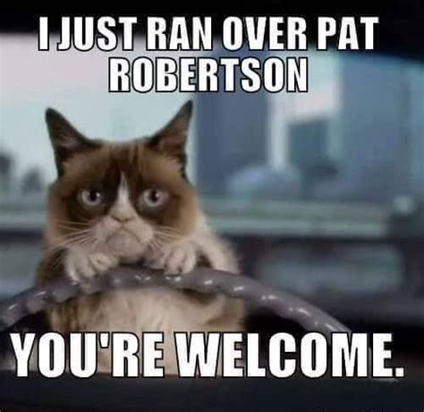 Mean Kitty Meme - 440 best grumpy cat images on pinterest funny stuff