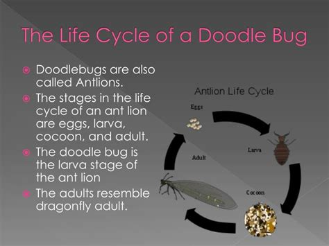 ppt the life cycle of ladybugs powerpoint presentation ppt doodle bugs powerpoint presentation id 1865371