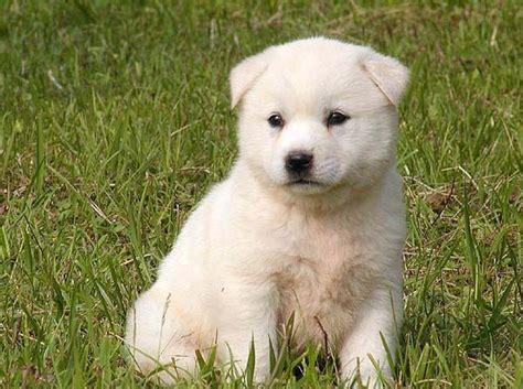 polar bear pet    day