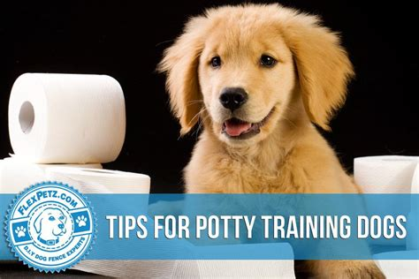 potty puppy tips tips for potty dogs
