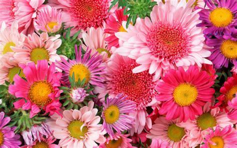 imagenes flores originales originales fotos de flores hermosas para fondo de pantalla