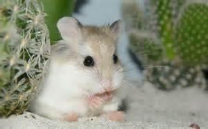 Wallpapers de hamsters :: Fotos e imagens Gatos