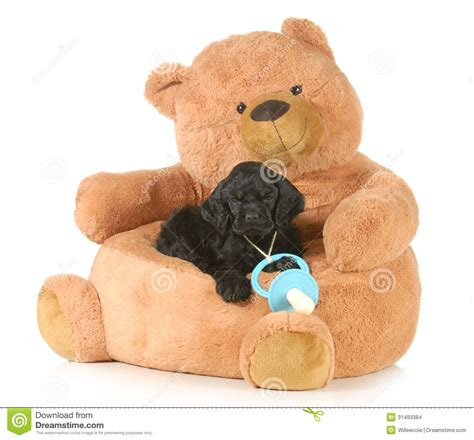 teddy bear bed cute puppy stock images image 31493384