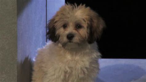 animal planet puppy bowl adoptions looking to adopt puppy bowl animal planet