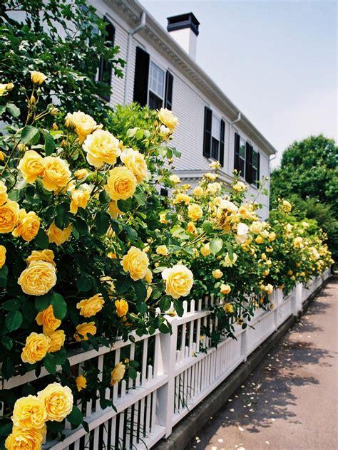 dreamy cottage gardens hgtvs decorating design