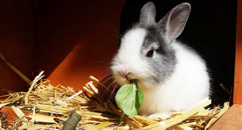 best rabbit bedding best bedding for rabbits helping you to make the right
