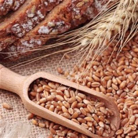 whole grains effect on blood sugar 11 universal truths in nutrition that actually