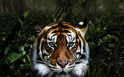 Jungle Animal by Quotes About Animals Jungle Quotesgram
