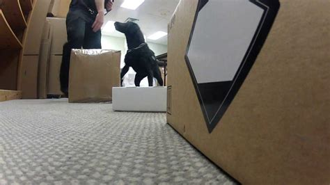 how to conceal drugs from a sniffer can you mail drugs through the usps without getting