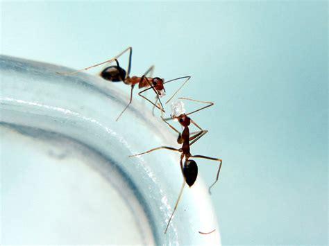 ameisen im garten vertreiben 3894 ameisen effektiv vertreiben besserhaushalten de