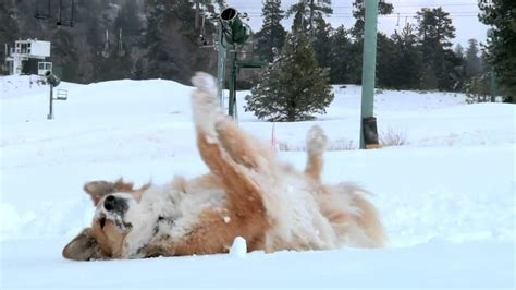 ad of the day subarus road tripping dogs are cute funny and almost subaru dogs commercial ski trip youtube