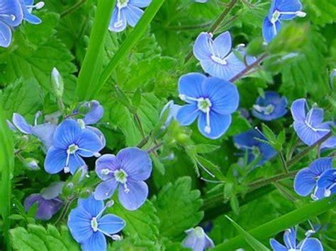 Que Peut On Planter En Septembre by Que Planter En Septembre Fleurs Chardon Bleu Des Alpes