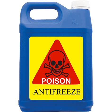 symptoms of antifreeze poisoning in dogs antifreeze poisoning in dogs symptoms treatment and prevention dogs cats pets