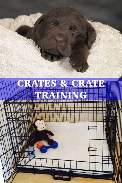 crate training your labrador crates and crate training