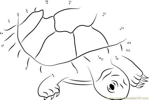 dot to dot turtle printable red headed amazon river turtle dot to dot printable