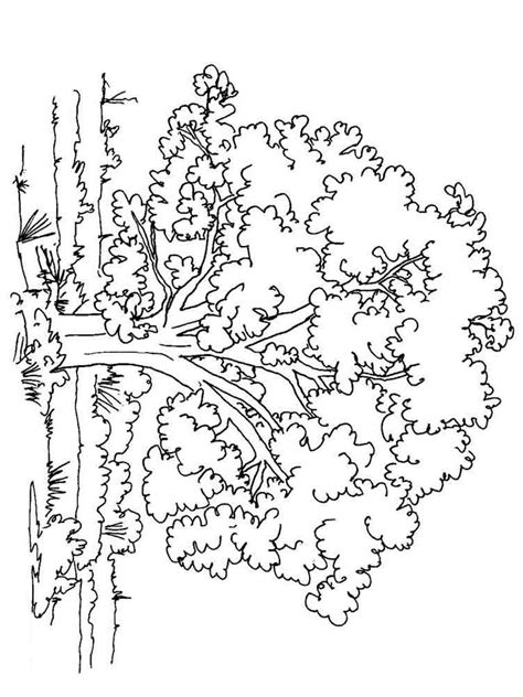deciduous tree coloring page deciduous tree coloring page coloring pages