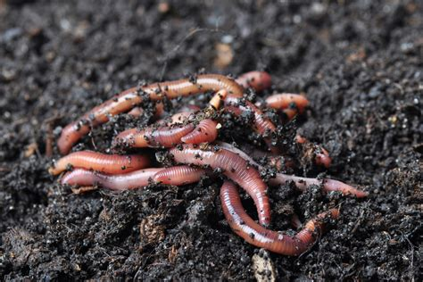 garden worms renuable resources cbell river landscape product sales delivery