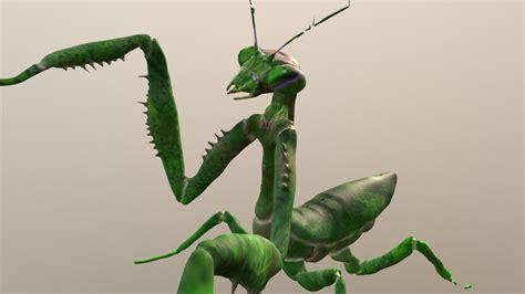 praying mantis    model  virreal