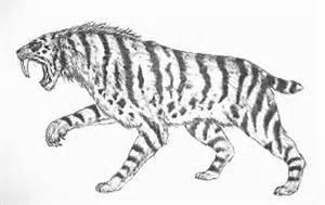 Galerry animal coloring tiger