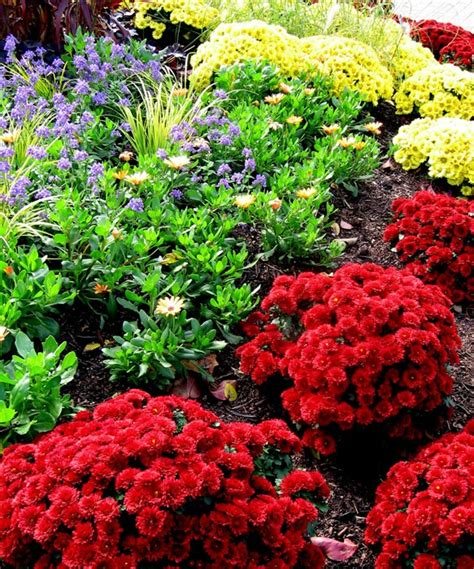 fall garden mums 64 best fall garden images on