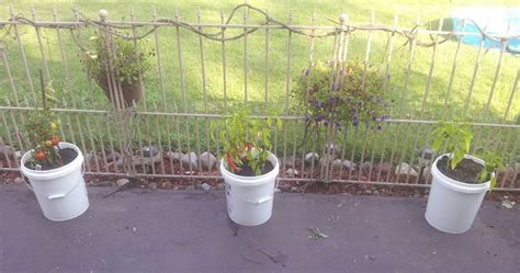 5 Gallon Vegetable Garden Vegetable Garden Anywhere 5 Gallon Buckets Survive Our