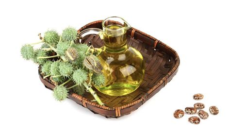 Castor Oil For Removal Of Ingrown Hairs | ingrown hair on penis and penile shaft treatment and