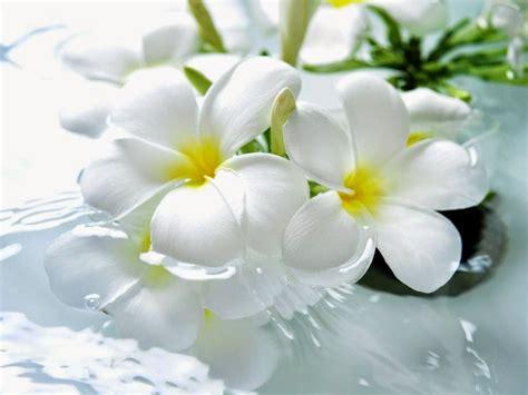 Imagenes Licras Blancas | banco de imagenes y fotos gratis imagenes de amor flores