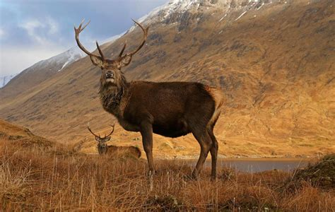 Search Scotland Scottish Animals Wildlife Visitscotland