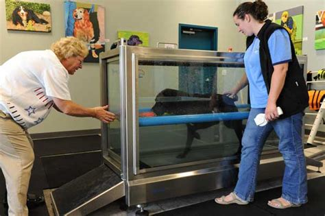 water therapy for dogs how hydrotherapy for dogs works and why it s worth it