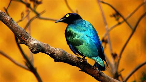 wallpaper blue birdcage blue bird wallpapers hd wallpapers id 8158