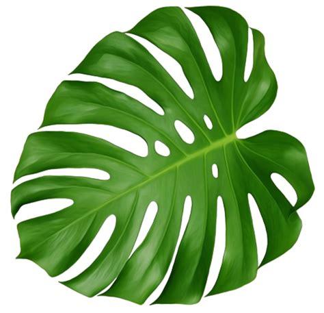 leaf pattern png monstera leaf tumblr