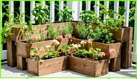 menanam tanaman obat herbal  pekarangan rumah