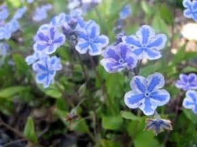 Fleurs Bleues Vivaces by Fleurs Bleues Vivaces Printemps