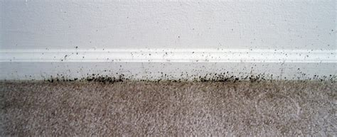 bed bug bite treatment tips bed bug treatment site