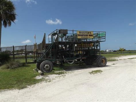 everglades boat rentals ochopee fl hug and kiss a gator picture of wooten s everglades