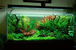 lighting in planted aquariums