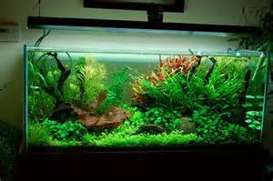 Matt Helgeson's aquarium pictured above and achieved by using our