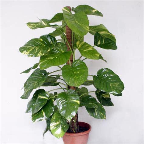 images of plants money plant money