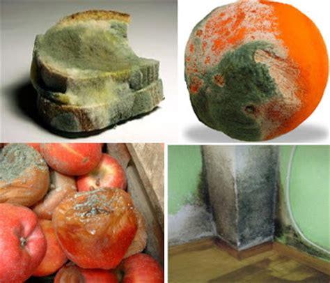 ciencias naturales ceuja   descompone   conserva los alimentos