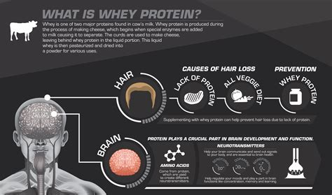 protein health benefits health benefits of whey protein isolate g6 sports nutrition