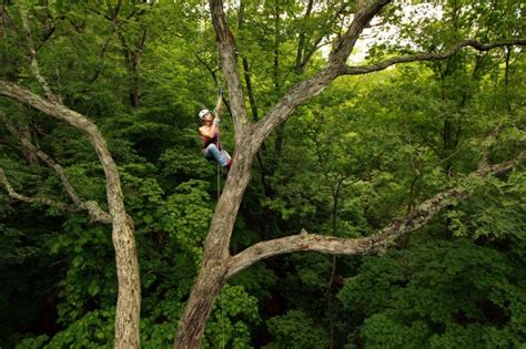Stlcc Background Check Adventure Tree Stlcc Tree Climbing Course