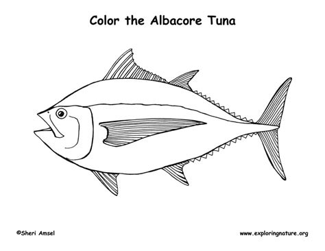 tuna fish coloring page