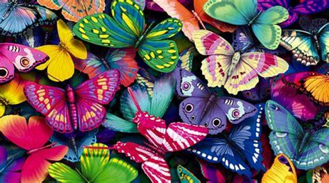 gambar wallpaper cantik dan lucu 25 gambar kupu kupu wallpaper kupu kupu cantik terindah