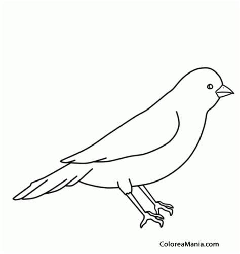 imagenes faciles para dibujar de pajaros colorear silueta de canario aves dibujo para colorear