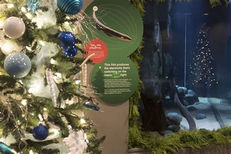 holiday traditions start at vancouver aquarium nov 24