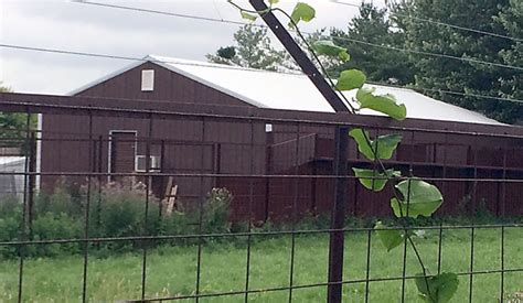 dog barn noise an issue for westfield kennel plans
