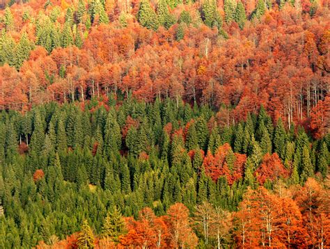 best hikes italy in the oldest and most beautiful forests