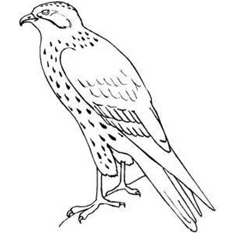 Coloring Page Falcon Bird | hawk falcon coloring pages for kids preschool and